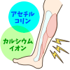 足がつるメカニズム